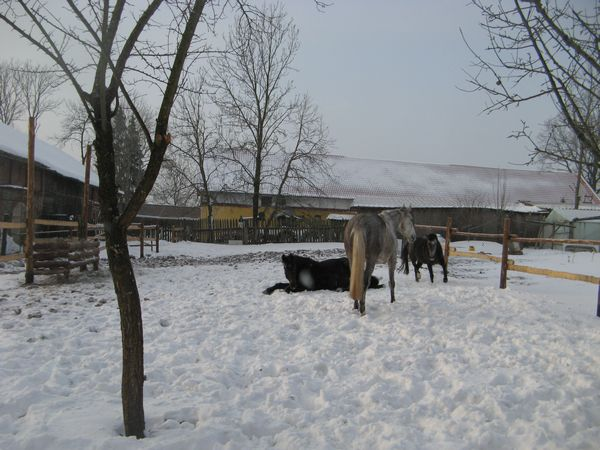 Our horses in winter